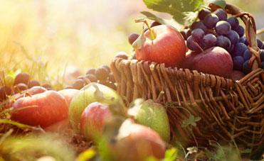 cibo che dà energia in autunno