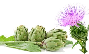 Depura l'organismo grazie a prodotti a base di Carciofo e Cardo Mariano