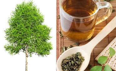 The verde e betulla, medicine drenanti