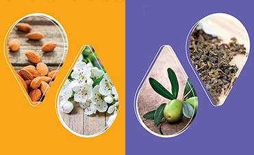 mandorle, fiori di biancospino, ramoscello d'olivo e the verde